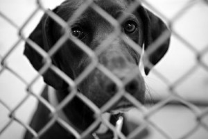 sad-shelter-dog2